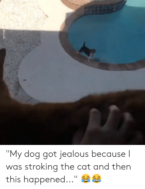 """Dank, Jealous, and 🤖: BIAJA """"My dog got jealous because I was stroking the cat and then this happened..."""" 😂😂"""