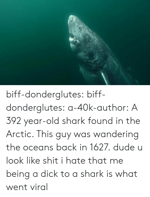 Dude, Shit, and Tumblr: biff-donderglutes: biff-donderglutes:  a-40k-author: A 392 year-old shark found in the Arctic. This guy was wandering the oceans back in 1627. dude u look like shit  i hate that me being a dick to a shark is what went viral
