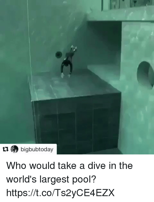 Takeing: (?) bigbubtoday Who would take a dive in the world's largest pool? https://t.co/Ts2yCE4EZX