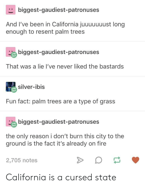 Fire, California, and Silver: biggest-gaudiest-patronuses  And I've been in California juuuuuuust long  enough to resent palm trees  biggest-gaudiest-patronuses  That was a lie I've never liked the bastards  silver-ibis  Fun fact: palm trees are a type of grass  biggest-gaudiest-patronuses  the only reason i don't burn this city to the  ground is the fact it's already on fire  2,705 notes California is a cursed state
