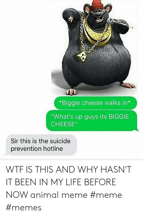 "Life, Meme, and Memes: *Biggie cheese walks in*  ""What's up guys its BIGGIE  CHEESE""  Sir this is the suicide  prevention hotline WTF IS THIS AND WHY HASN'T IT BEEN IN MY LIFE BEFORE NOW animal meme #meme #memes"