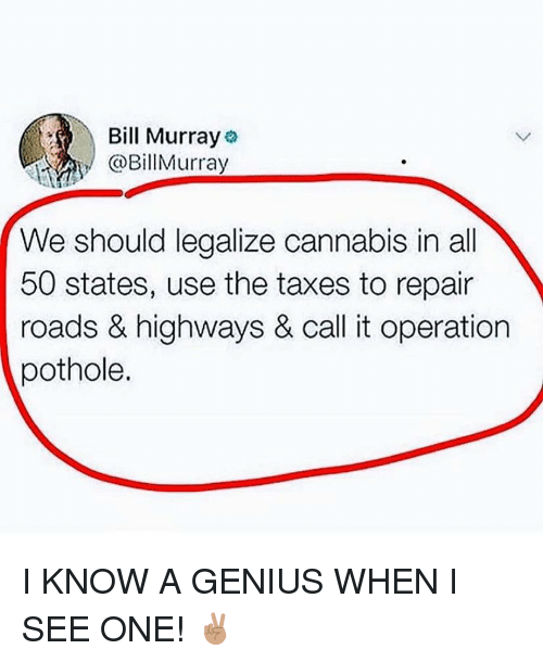 Bill Murray: Bill Murray  BillMurray  We should legalize cannabis in all  50 states, use the taxes to repair  roads & highways & call it operation  pothole. I KNOW A GENIUS WHEN I SEE ONE! ✌🏽