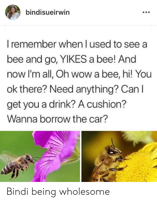 yikes: bindisueirwin  I remember when I used to see a  bee and go, YIKES a bee! And  now I'm all, Oh wow a bee, hi! You  ok there? Need anything? Can I  get you a drink? A cushion?  Wanna borrow the car? Bindi being wholesome