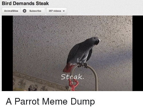 Meme, Videos, and Parrot: Bird Demands Steak  AnimalSitesSubscribe 3  357 videos  Steak. A Parrot Meme Dump