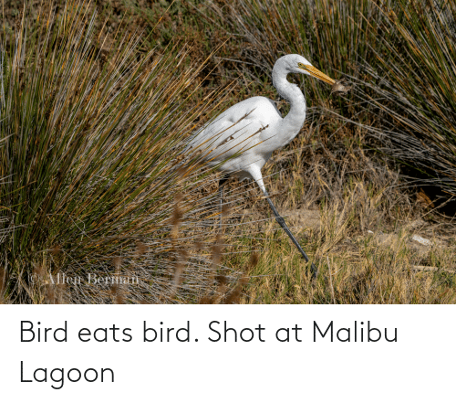 malibu: Bird eats bird. Shot at Malibu Lagoon
