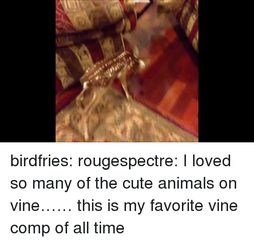 Animals, Cute, and Cute Animals: birdfries:  rougespectre:  I loved so many of the cute animals on vine……  this is my favorite vine comp of all time