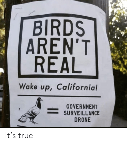 California: BIRDS  AREN'T  REAL  Wake up, California!  GOVERNMENT  SURVEILLANCE  DRONE It's true