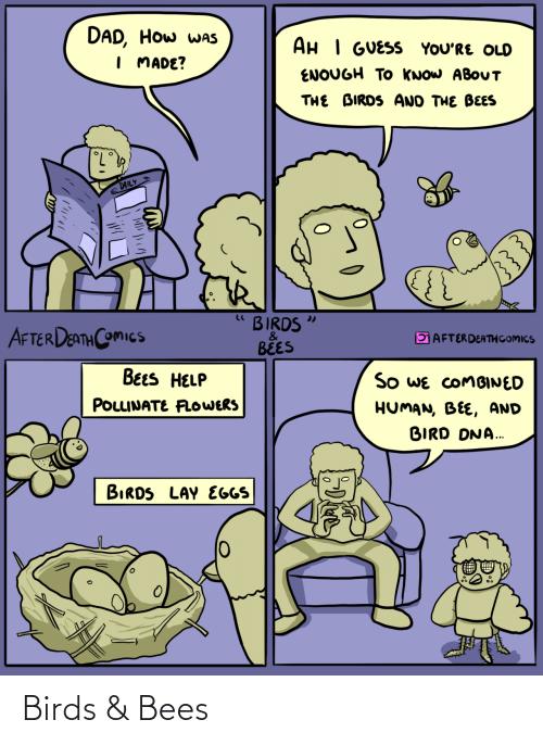 Bees: Birds & Bees