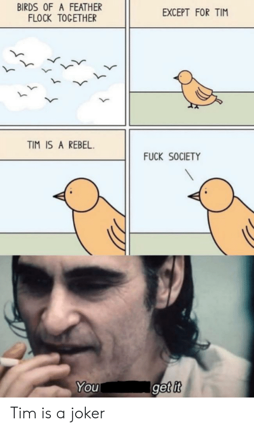rebel: BIRDS OF A FEATHER  FLOCK TOGETHER  EXCEPT FOR TIM  TIM IS A REBEL  FUCK SOCIETY  Iget it  You Tim is a joker