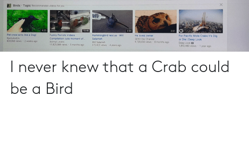 Lovers Will: Birds-Topic Recommended videos for you  4:25  10:46  3:52  3:01  3:04  Pet crow acts like a Dog!  RpetsAndUs  834 060 views 2 weeks ago  Funny Parrots Videos  Compilation cute moment of...  Hummingbird rescue-Will  Salameh  He loves owner  For Pacific Mole Crabs It's Dig  or Die Deep Look  Deep Look  1,892,480 views 1 year ago  GEN3 Owl Channe  9,728,650 views 8 months ago  Animal Lovers  Will Salameh  370,423 views4  11,825,088 views 5 months ago  years ago I never knew that a Crab could be a Bird