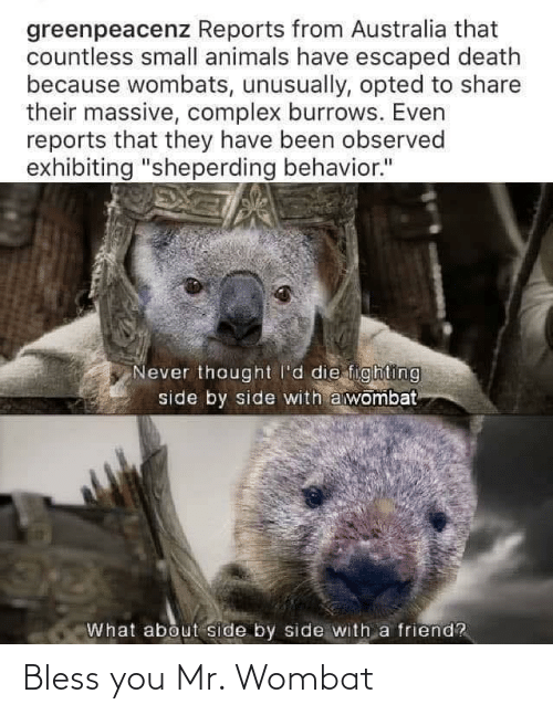 Wombat, You, and Bless: Bless you Mr. Wombat