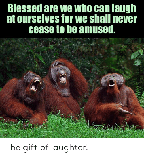 Blessed, Memes, and The Gift: Blessed are we who can laugh  at ourselves for we shall never  cease to be amused. The gift of laughter!