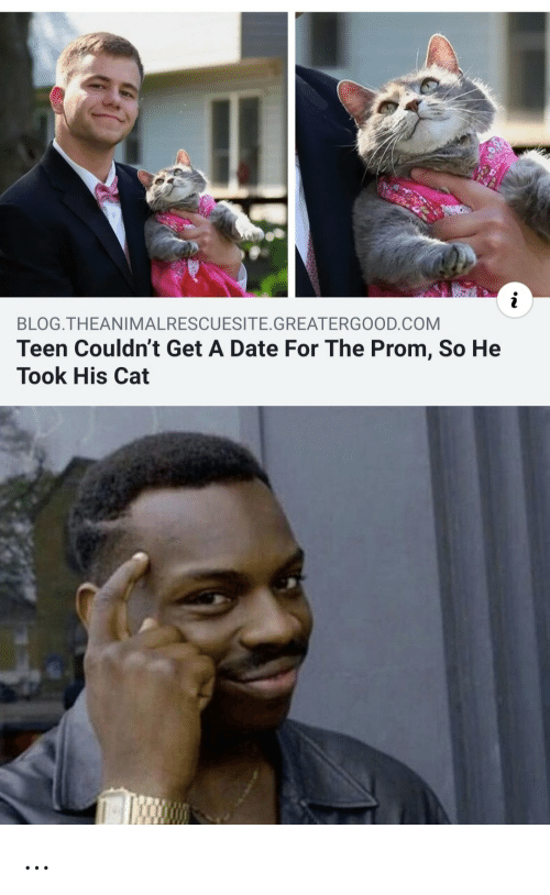 prom: BLOG.THEANIMALRESCUESITE. GREATERGOOD.COM  Teen Couldn't Get A Date For The Prom, So He  Took His Cat …