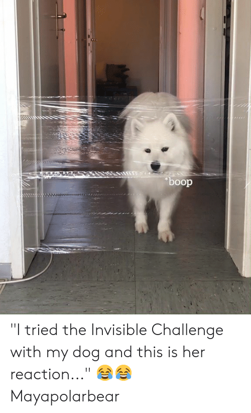 """boop: boop """"I tried the Invisible Challenge with my dog and this is her reaction..."""" 😂😂  Mayapolarbear"""