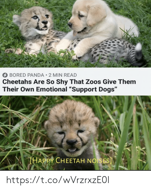 "zoos: BORED PANDA 2 MIN READ  Cheetahs Are So Shy That Zoos Give Them  Their Own Emotional ""Support Dogs""  THAPPY CHEETAH NOISES] https://t.co/wVrzrxzE0l"