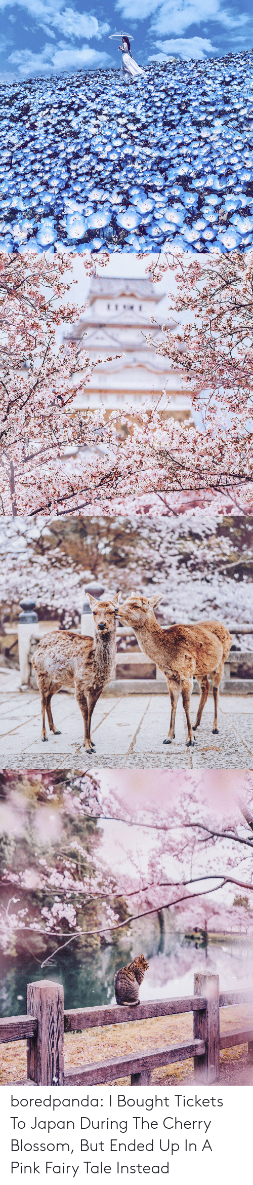 kyoto: boredpanda:    I Bought Tickets To Japan During The Cherry Blossom, But Ended Up In A Pink Fairy Tale Instead