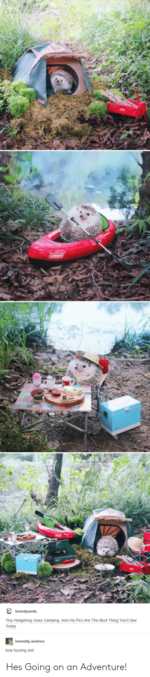 holy fucking shit: boredpanda  Tiny Hedgehog Goes Camping, And His Pics Are The Best Thing You'll See  Today  honestly-andrew  holy fucking shit Hes Going on an Adventure!