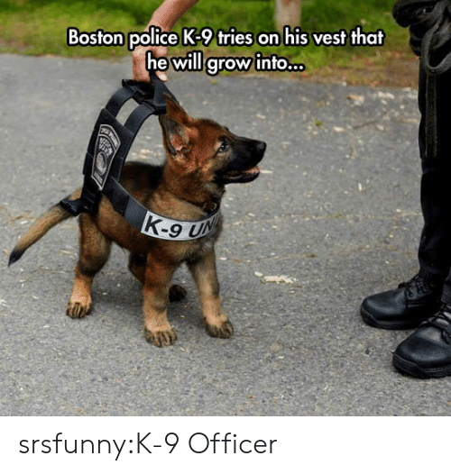 Police, Tumblr, and Blog: Boston police K-9 tries on his vest that  he will grow into.. srsfunny:K-9 Officer