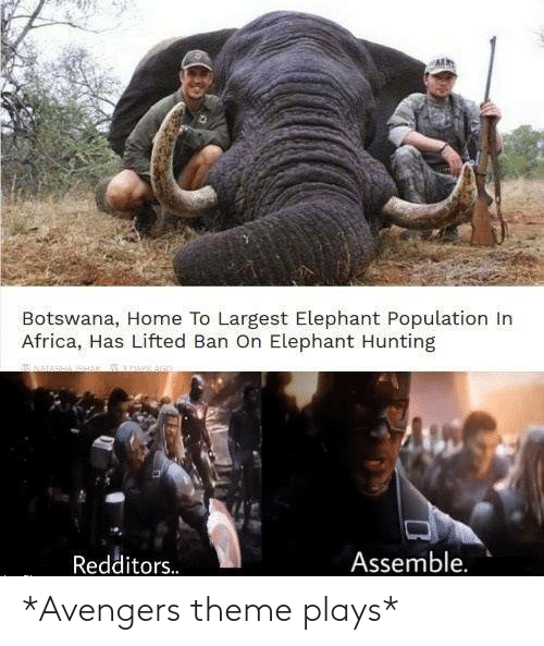 Africa: Botswana, Home To Largest Elephant Population In  Africa, Has Lifted Ban On Elephant Hunting  Assemble.  Redditors. *Avengers theme plays*