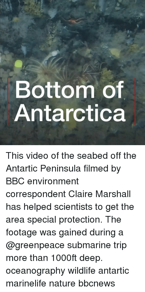 Antarctica: Bottom of  Antarctica This video of the seabed off the Antartic Peninsula filmed by BBC environment correspondent Claire Marshall has helped scientists to get the area special protection. The footage was gained during a @greenpeace submarine trip more than 1000ft deep. oceanography wildlife antartic marinelife nature bbcnews