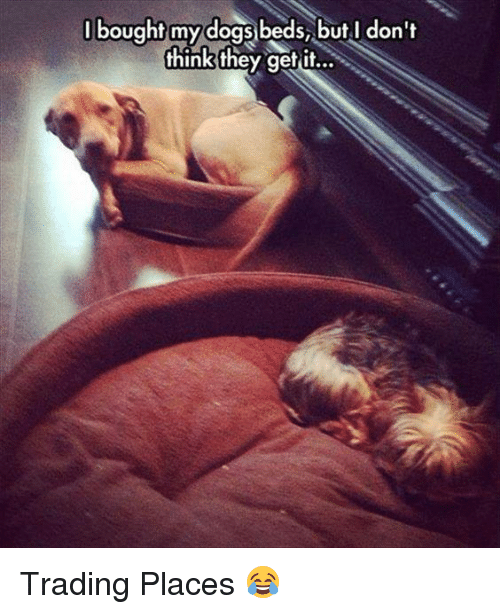 Trading Places: bought my dogs beds, but don't  I think they get it... Trading Places 😂