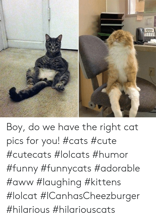 Aww, Cats, and Cute: Boy, do we have the right cat pics for you! #cats #cute #cutecats #lolcats #humor #funny #funnycats #adorable #aww #laughing #kittens #lolcat #ICanhasCheezburger #hilarious #hilariouscats