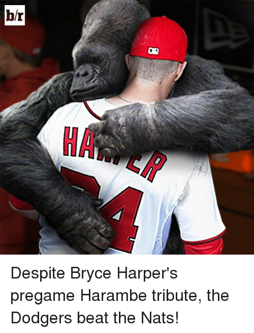 Dodgers, Sports, and Beats: br Despite Bryce Harper's pregame Harambe tribute, the Dodgers beat the Nats!