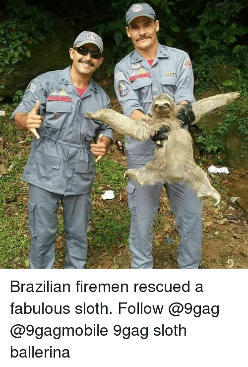 Memes, Sloth, and Brazilian: Brazilian firemen rescued a fabulous sloth. Follow @9gag @9gagmobile 9gag sloth ballerina