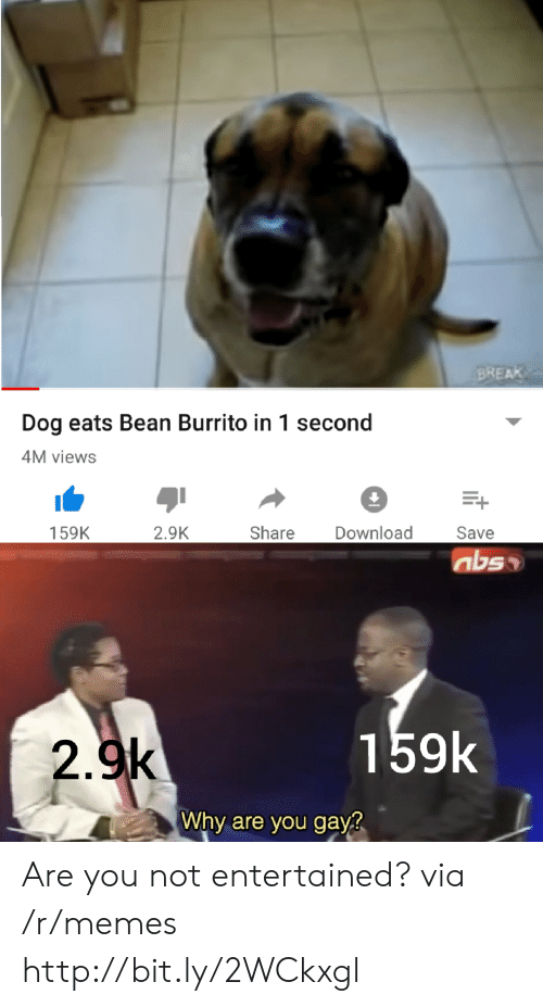 Break Dog Eats Bean Burrito In 1 Second M Views 29k Share Download 159k Save 159k 29k Why Are You Gayg Are You Not Entertained Via Rmemes Httpbitly2wckxgl Meme On Ballmemes Com