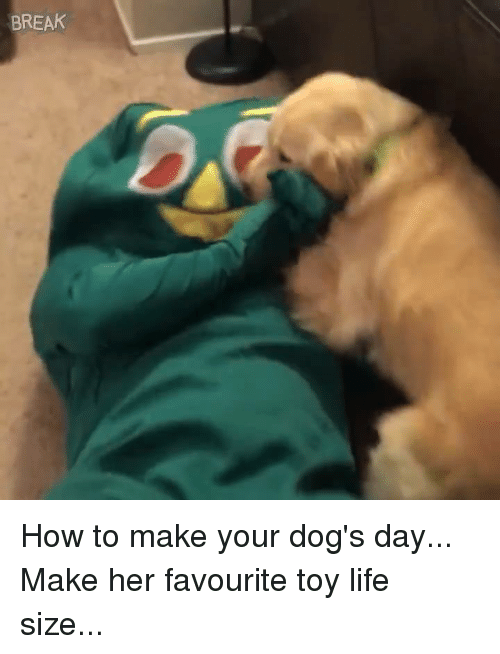 Dank, Dogs, and Life: BREAK How to make your dog's day... Make her favourite toy life size...