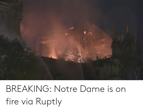 Dank, Fire, and Notre Dame: BREAKING: Notre Dame is on fire  via Ruptly
