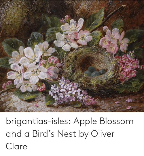 Apple: brigantias-isles:    Apple Blossom and a Bird's Nest   by Oliver Clare