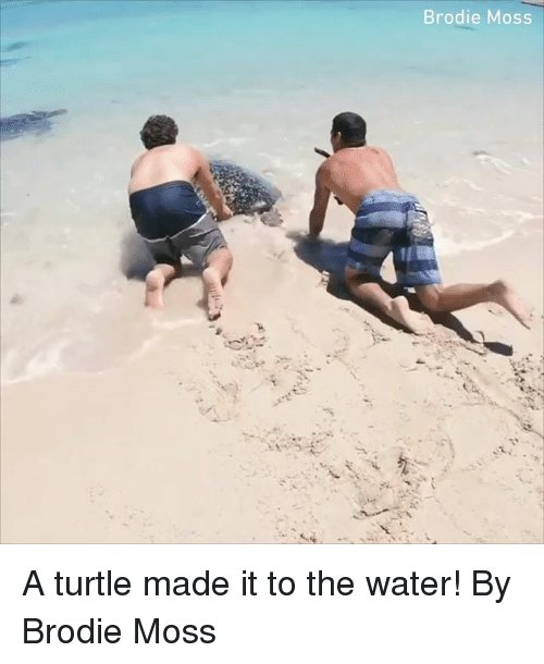 Dank, Turtle, and Water: Brodie Moss A turtle made it to the water!  By Brodie Moss