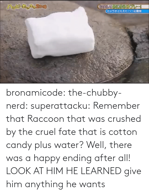 Candy: bronamicode:  the-chubby-nerd:  superattacku:    Remember that Raccoon that was crushed by the cruel fate that is cotton candy plus water? Well, there was a happy ending after all!     LOOK AT HIM HE LEARNED   give him anything he wants