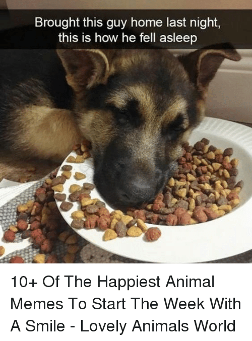 Animals, Memes, and Animal: Brought this guy home last night,  this is how he fell asleep 10+ Of The Happiest Animal Memes To Start The Week With A Smile - Lovely Animals World