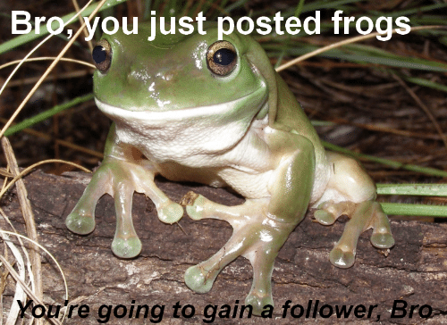 frogs: Broyou just posted frogs  Youre going to gain a follower Bro