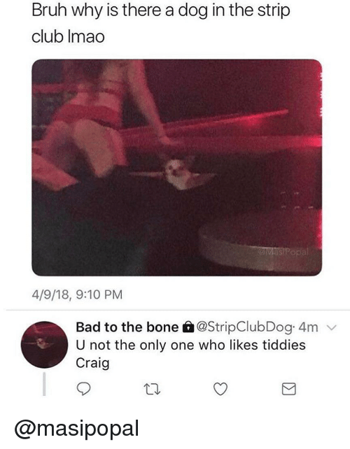 Bad, Bruh, and Club: Bruh why is there a dog in the strip  club Imao  as  4/9/18, 9:10 PM  Bad to the bone à@StripClubDog 4m  U not the only one who likes tiddies  Craig @masipopal