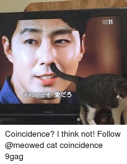 9gag, Memes, and Coincidence: BS11 Coincidence? I think not! Follow @meowed cat coincidence 9gag