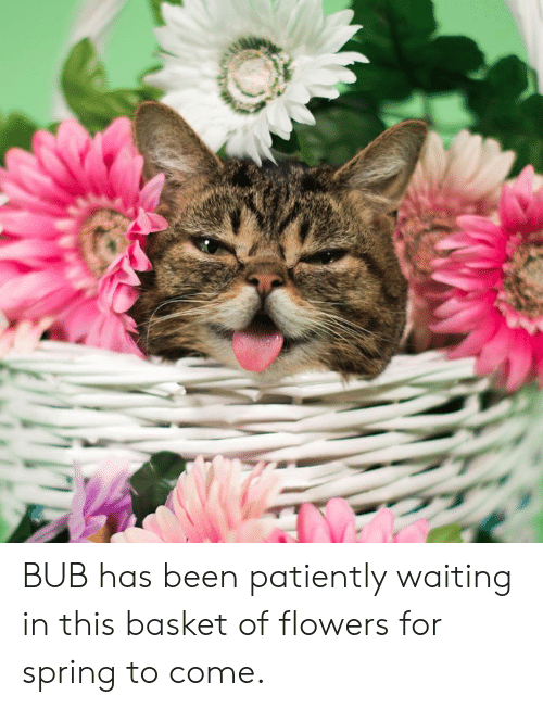 Patiently Waiting: BUB has been patiently waiting in this basket of flowers for spring to come.