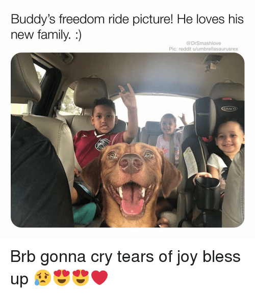 Bless Up, Family, and Memes: Buddy's freedom ride picture! He loves his  new family. :)  @DrSmashlove  Pic: reddit u/umbrellasaurusrex  GRACO Brb gonna cry tears of joy bless up 😥😍😍❤️
