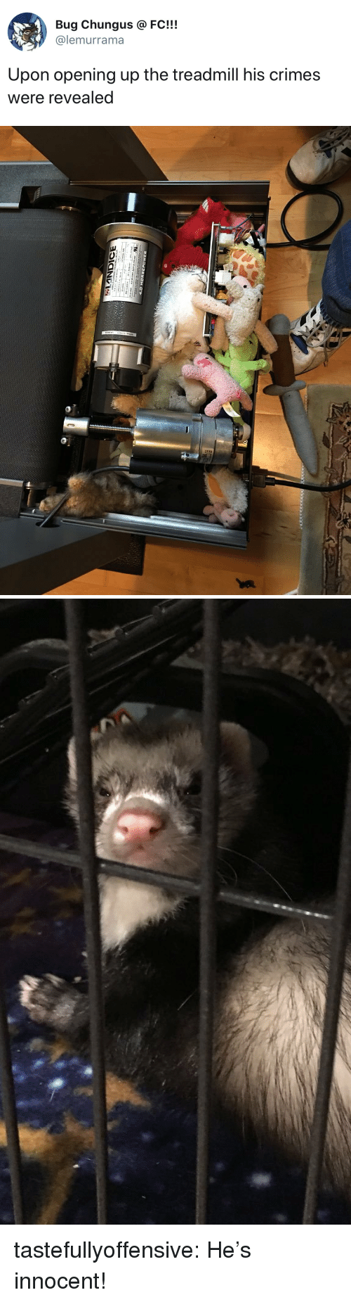Treadmill: Bug Chungus @FC!!!  @lemurrama  Upon opening up the treadmill his crimes  were revealed tastefullyoffensive:  He's innocent!