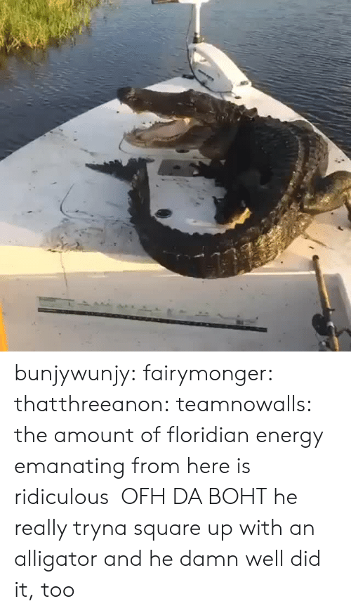 Energy, Square Up, and Tumblr: bunjywunjy: fairymonger:  thatthreeanon:   teamnowalls: the amount of floridian energy emanating from here is ridiculous OFH DA BOHT   he really tryna square up with an alligator    and he damn well did it, too