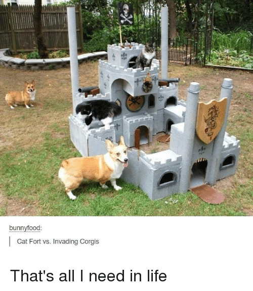 Food Cat: bunny food  Cat Fort vs. Invading Corgis That's all I need in life