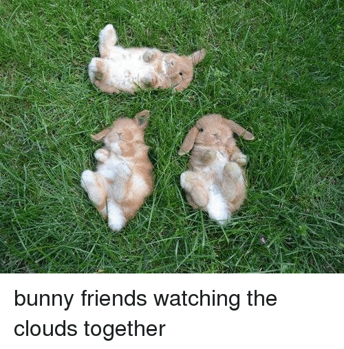 Bunni: bunny friends watching the clouds together