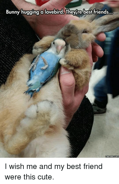 lovebird: Bunny hugging a lovebird. They re best friends...  COM I wish me and my best friend were this cute.