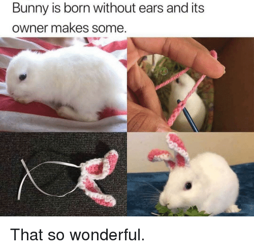 Bunny, Born, and Wonderful: Bunny is born without ears and its  owner makes some That so wonderful.