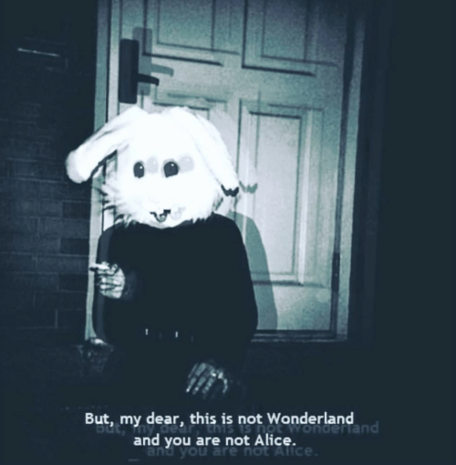 alice: But, my dear, this is not Wonderland  and you are not Alicendertand  and you are not Alice
