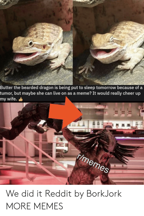 Dank, Meme, and Memes: Butter the bearded dragon is being put to sleep tomorrow because of a  tumor, but maybe she can live on as a meme? It would really cheer up  my wife.  r/memes We did it Reddit by BorkJork MORE MEMES