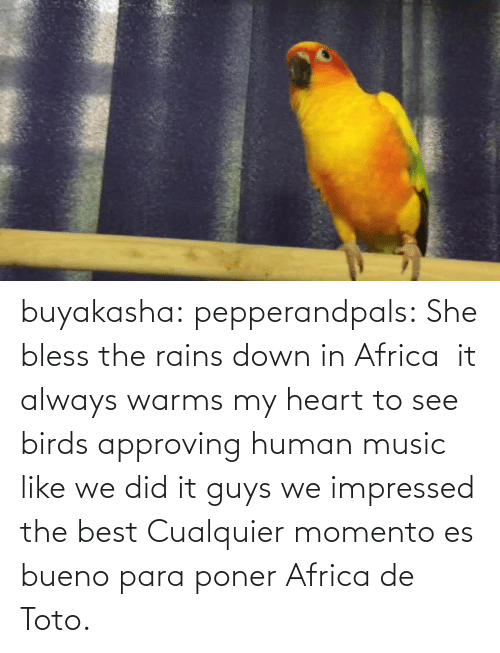 Africa: buyakasha:  pepperandpals: ‪She bless the rains down in Africa ‬ it always warms my heart to see birds approving human music like we did it guys we impressed the best  Cualquier momento es bueno para poner Africa de Toto.