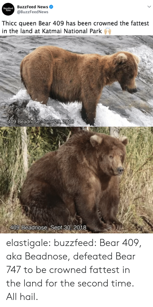 fattest: BuzzFeed News  @BuzzFeedNews  Buzzleed  News  Thicc queen Bear 409 has been crowned the fattest  in the land at Katmai National Park   409 Beadnose June 29, 2018   409 Beadnose Sept 30, 2018 elastigale:  buzzfeed: Bear 409, aka Beadnose, defeated Bear 747 to be crowned fattest in the land for the second time. All hail.